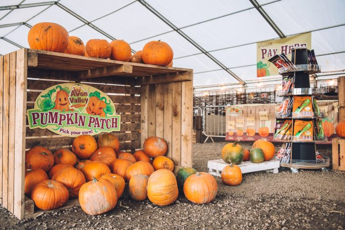 a pumpkin display in a wooden crate at avon valley
